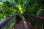 Boomslang Tree Canopy Walkway | Kirstenbosch | ©Arne Purves