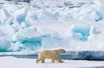 Rob Tarr | Arctic Imagery Portfolio