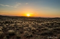 Lure of the Kgalagadi