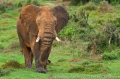 Addo Elephant National Park: Wonders of Rain