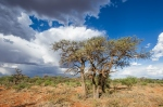 Mokala National Park by wildlife and conservation photographer Peter Chadwick.jpg
