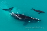 Southern right whale by wildlife and conservation photographer Peter Chadwick