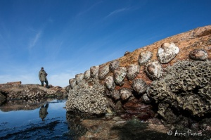 Giant Limpets | Namaqua National Park