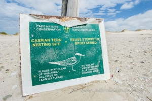 Caspian Tern sign by wildlife and conservation photographer Peter Chadwick