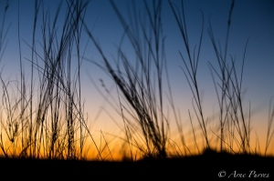 Kgalagadi Sunset Through The Grass | ©Arne Purves