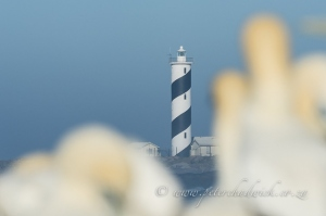 Lighthouse and gannets by wildlife and conservation photographer Peter Chadwick.