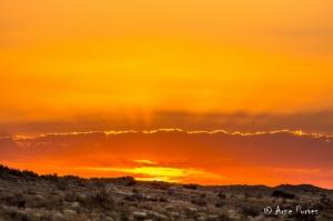 Kgalagadi Golden Sunset
