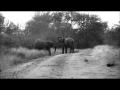 Safaries in Africa | Kruger National Park Elephant behaviour
